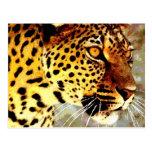 Eyes of Leopard Postcard