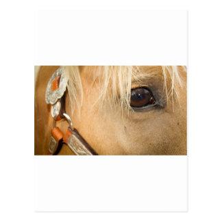 Eyes of the Colt Postcard