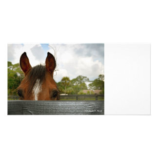 eyes over fence horse head photo cards