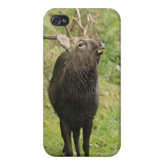 Ezo Deer iPhone 4 Cover