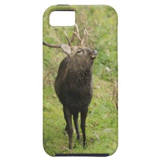 Ezo Deer iPhone 5 Case