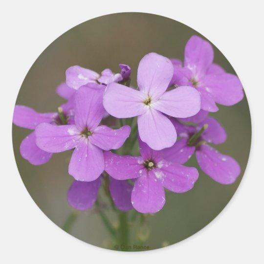 F0019 Purple Wildflowers Dames Rocket Round Sticker