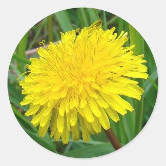 """F0045 Dandelion """"Taraxacum Officinale"""" Round Sticker"""