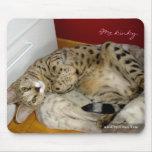 F1 Savannah Cat kinky Mousepad