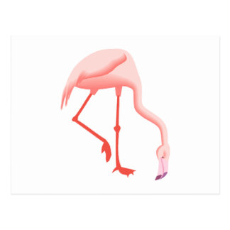 Fabio Flamingo Postcard