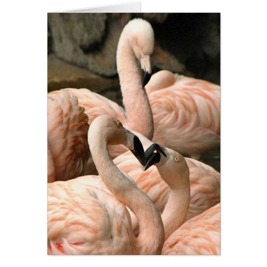 Fabulous Flamingos Greeting Card