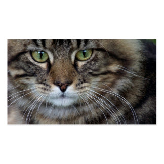 Face of a Feline (Cat) Business Cards