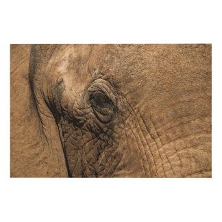 Face of an Elephant Wood Canvas