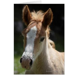 face of foal card