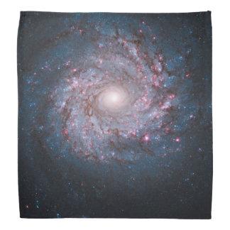 Face-on Spiral Galaxy NGC 3982 Kerchiefs
