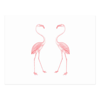Facing Flamingos Postcard