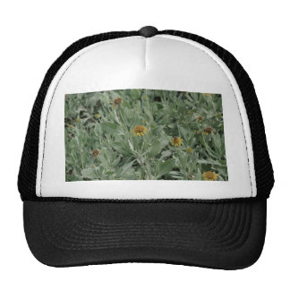 faded florida yellow daisy flower image cap