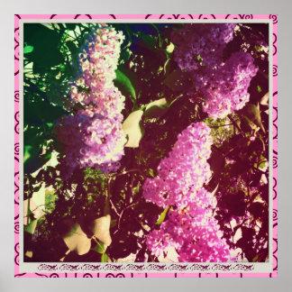 Faded Rainbow Lilacs Print