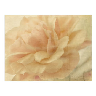 faded rose postcard