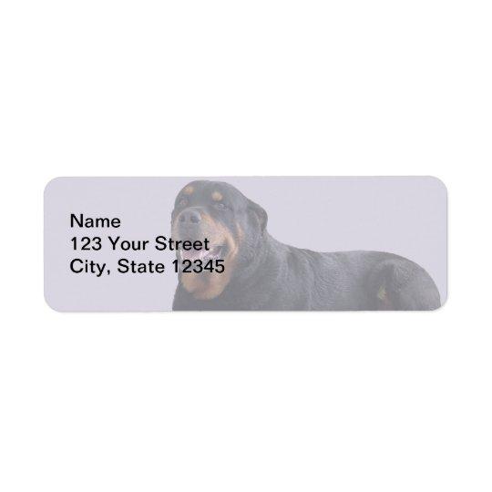 Faded Rottweiler Laying Down on Grey Return Address Label