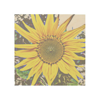 "Faded Sunflower 8""x8"" Wood Wall Art"
