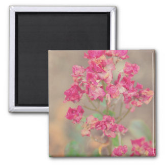 Fading beauty square magnet