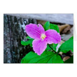 Fading Large-flowered Trillium Greeting Cards