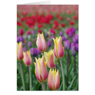 Fading Tulips Greeting Card