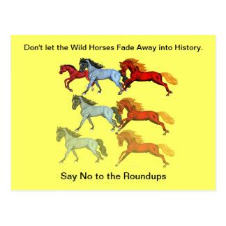 Fading Wild Horses Postcard