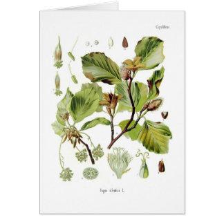 Fagus silvatica (Beech) Card