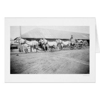 Fairbanks Horse Team 1915 Cards