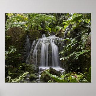 Fairchild Tropical Botanic Garden is a 33 ha (83 Poster