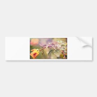 Fairy Drops Bumper Sticker