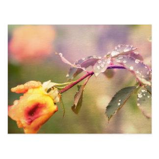 Fairy Drops Postcard