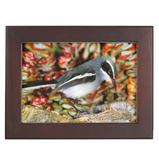 Fairy Flycatcher (Stenostira Scita) At Nest Memory Box