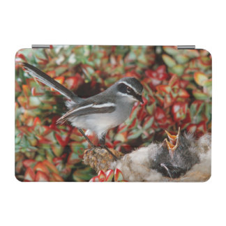 Fairy Flycatcher (Stenostira Scita) With Chick iPad Mini Cover