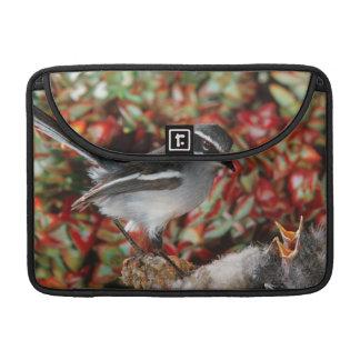 Fairy Flycatcher (Stenostira Scita) With Chick Sleeve For MacBooks