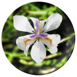 Fairy Iris Fine Porcelain Plate