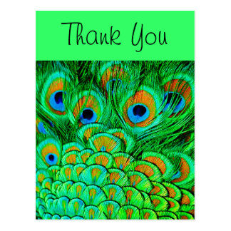 Fake Peacock Feathers Abstract Nature Pattern Postcard