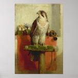 Falcon, 1837 posters