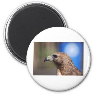 Falcon 6 Cm Round Magnet