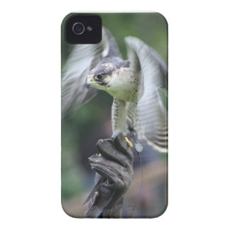 Falconry iPhone 4 Case