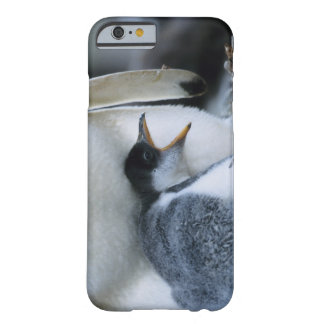 Falkland Islands. Gentoo penguin chick next to Barely There iPhone 6 Case