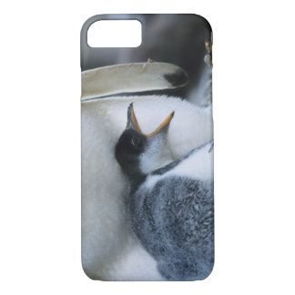 Falkland Islands. Gentoo penguin chick next to iPhone 7 Case