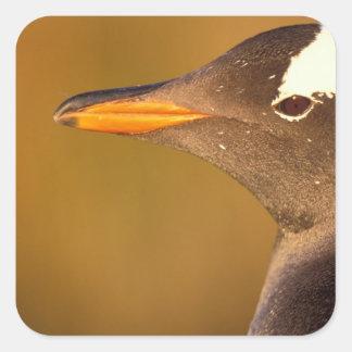 Falkland Islands Gentoo Penguins Pyroscelis Stickers