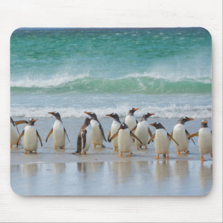 Falkland Islands. Saunders Island. Gentoo 5 Mouse Mat
