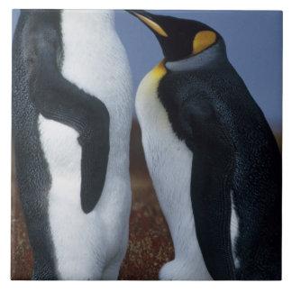 Falkland Islands. Two king penguins stand in Tile