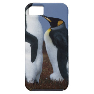 Falkland Islands. Two king penguins stand in Tough iPhone 5 Case