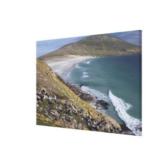 Falkland Islands, West Falkland, Saunders Canvas Print