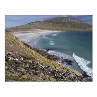 Falkland Islands, West Falkland, Saunders Postcard