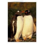 Falklands Islands. Gentoo Penguins.  (Pyroscelis Greeting Card
