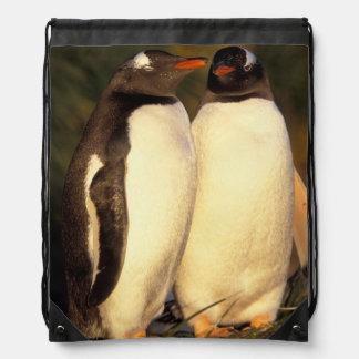 Falklands Islands. Gentoo Penguins.  (Pyroscelis Drawstring Bag