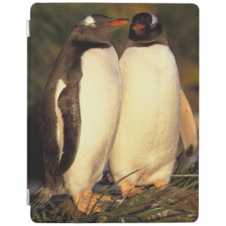 Falklands Islands. Gentoo Penguins.  (Pyroscelis iPad Cover