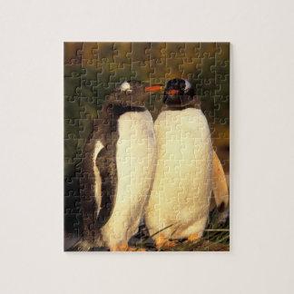 Falklands Islands. Gentoo Penguins.  (Pyroscelis Jigsaw Puzzle