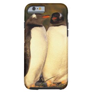 Falklands Islands. Gentoo Penguins.  (Pyroscelis Tough iPhone 6 Case